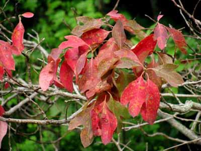 Proof of autumn