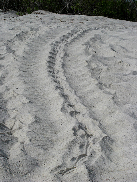 Turtletracks