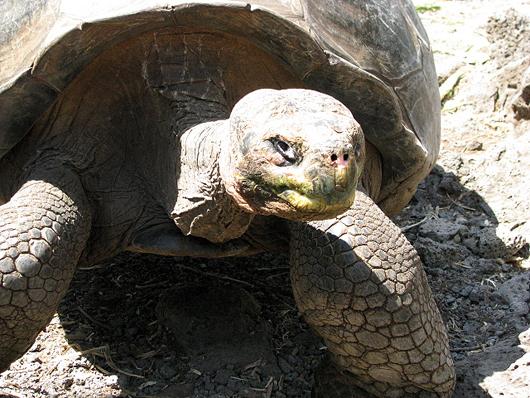 Tortoisecdrs