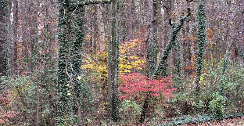 Trees6