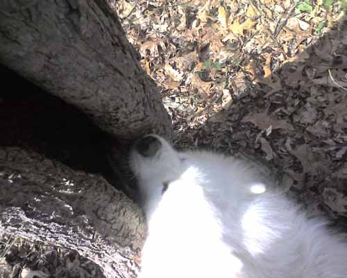 Treebite